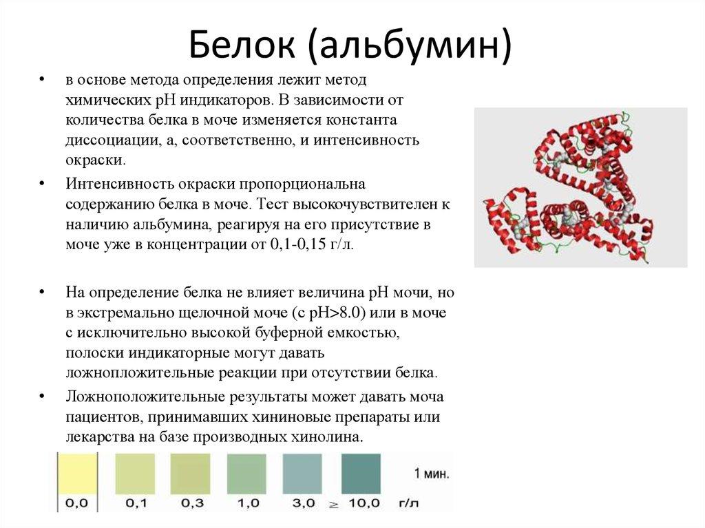 Альбумин в крови