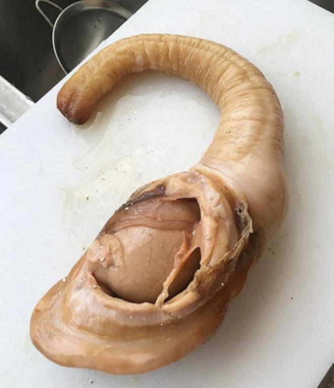 Моллюск гуидак и его «внешние данные»