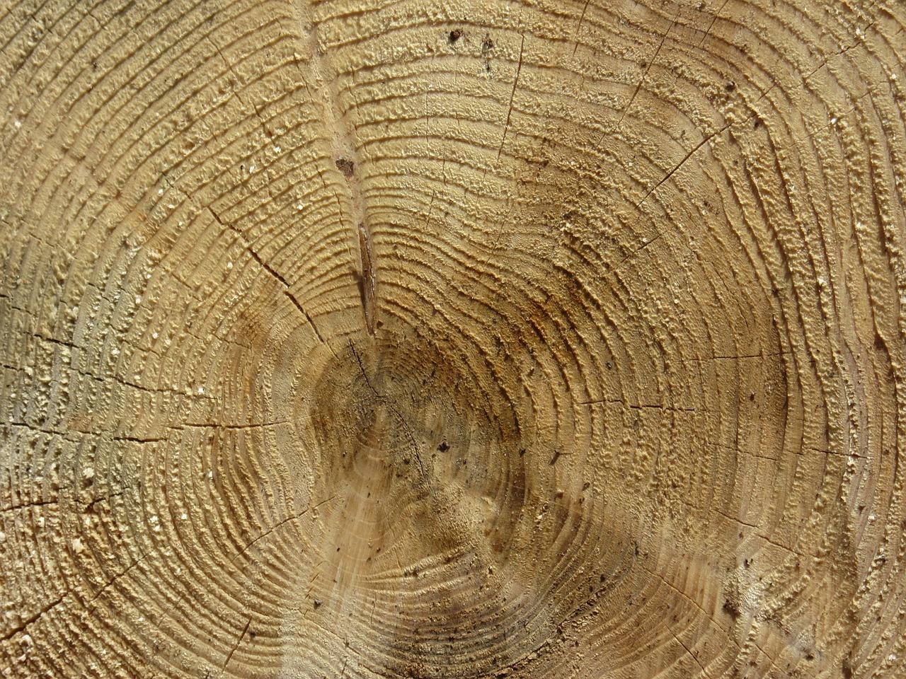 Годичные кольца деревьев - как образуются и что можно определить
