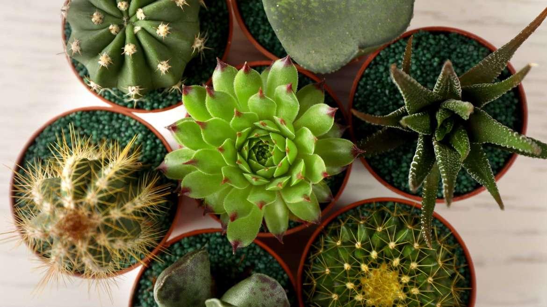Какие растения относятся к суккулентам и как за ними ухаживать в домашних условиях