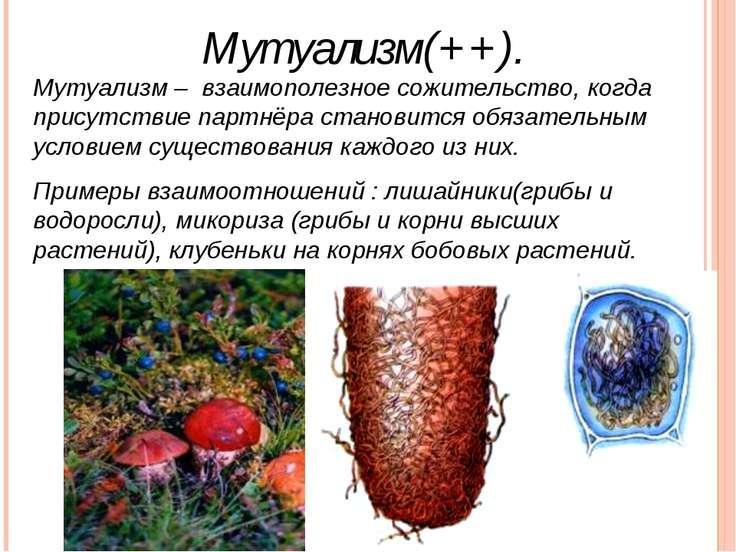 Мутуализм — википедия. что такое мутуализм