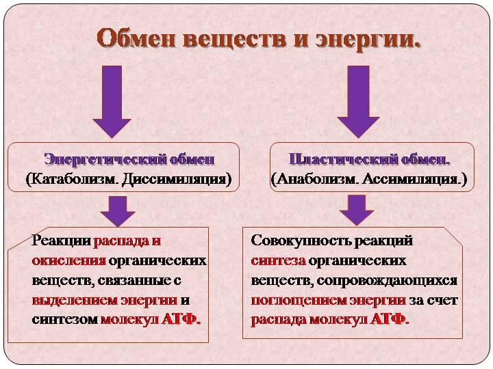 """Конспект """"обмен веществ и превращения энергии"""" - учительpro"""
