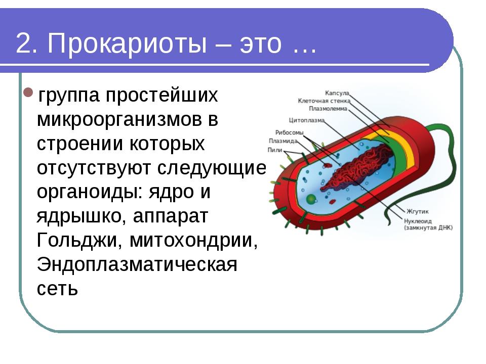 Прокариоты: строение и особенности жизнедеятельности