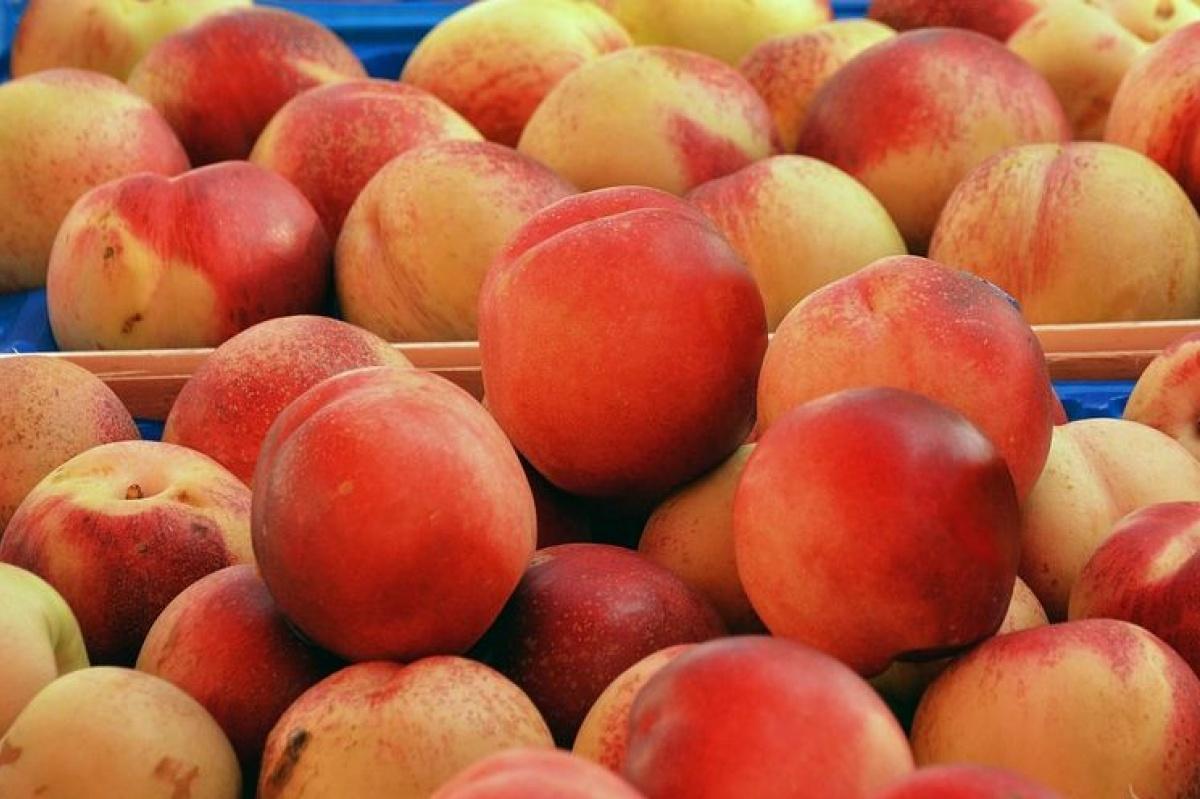 Персик — полезные свойства и противопоказания, состав, калорийность, рецепты. как вырастить персик в домашних условиях
