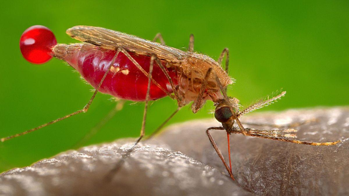 Что такое малярия: причины, симптомы и лечение этой опасной инфекции — net-bolezniam.ru