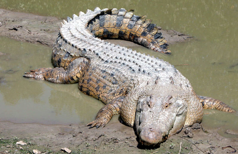 Дезоморфин (крокодил)- что это такое – нарконет