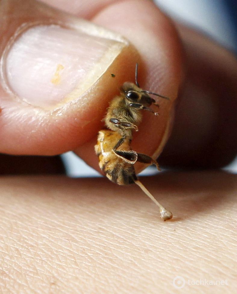Апитерапия показания к применению, лечение пчелами - вред и польза