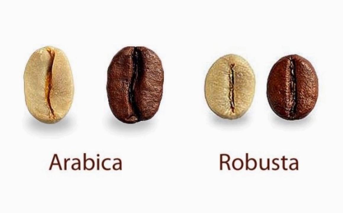 Робуста » энциклопедия кофе кофепедия