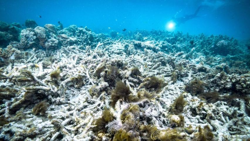 Коралловые рифы: типы, значение, угрозы и сохранение