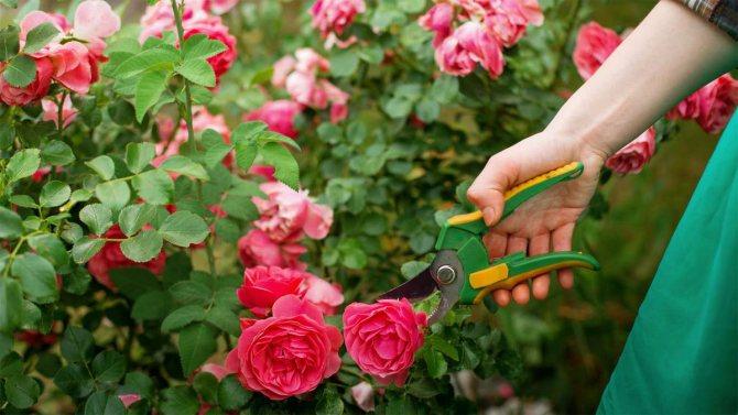Как выбрать садовый секатор: разновидности и характеристики