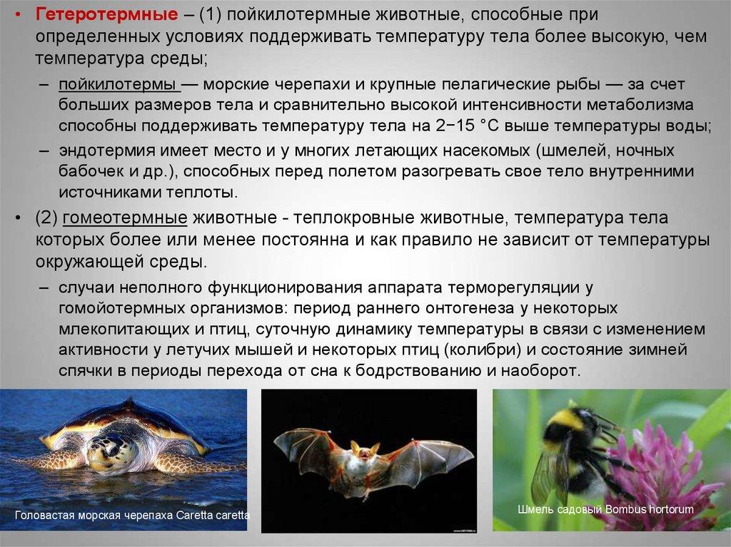 3.1.3. температурные адаптации пойкилотермных организмов. общая экология