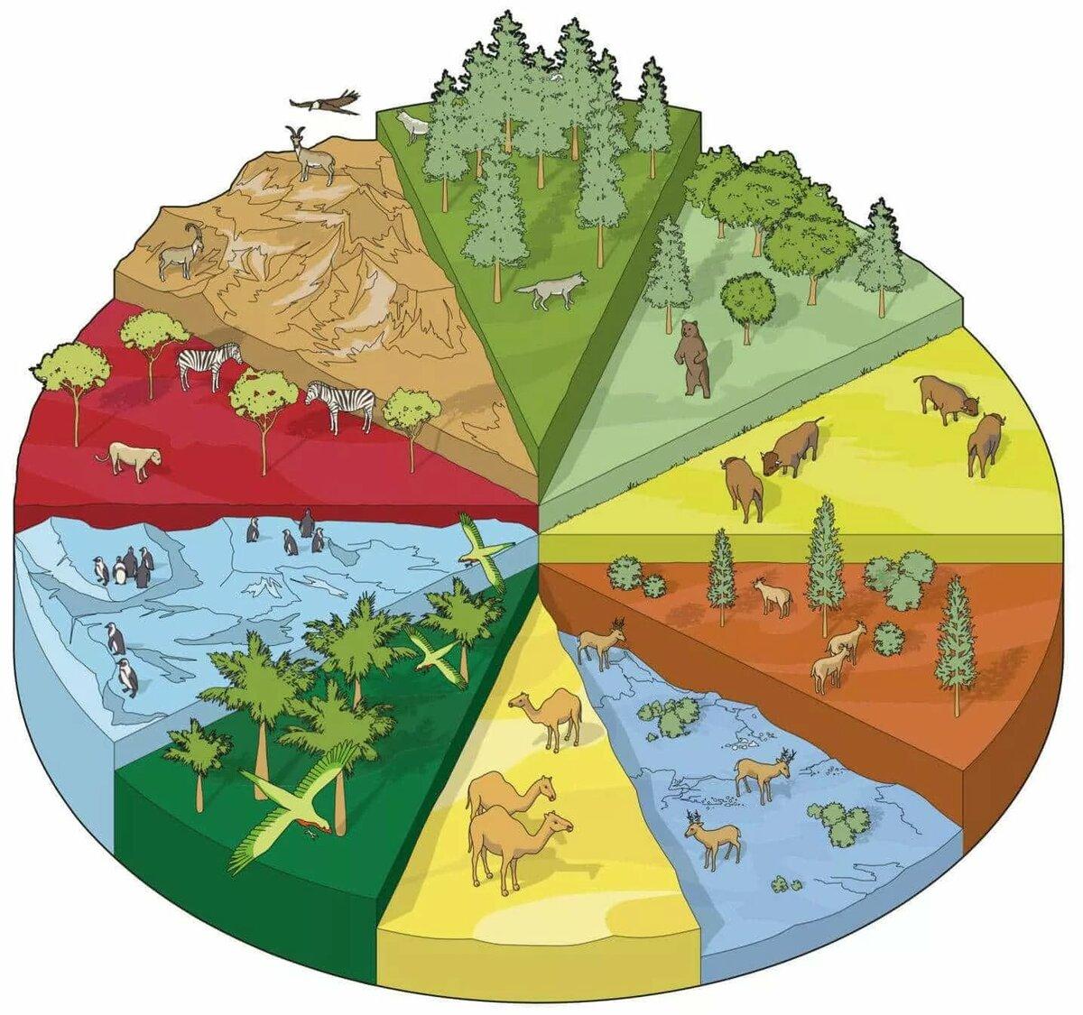 Биоразнообразие — википедия