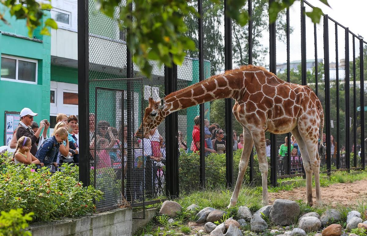 В каком режиме будет работать московский зоопарк с 16 июня
