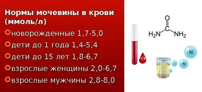 Мочевина в крови