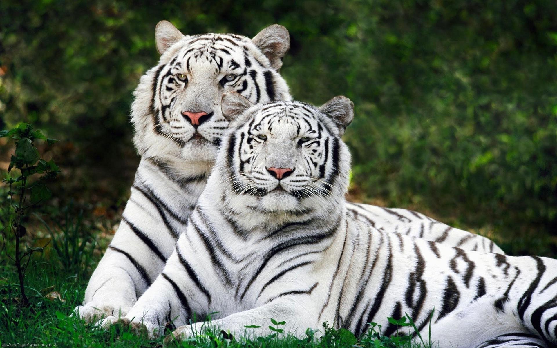 Животные — википедия. что такое животные