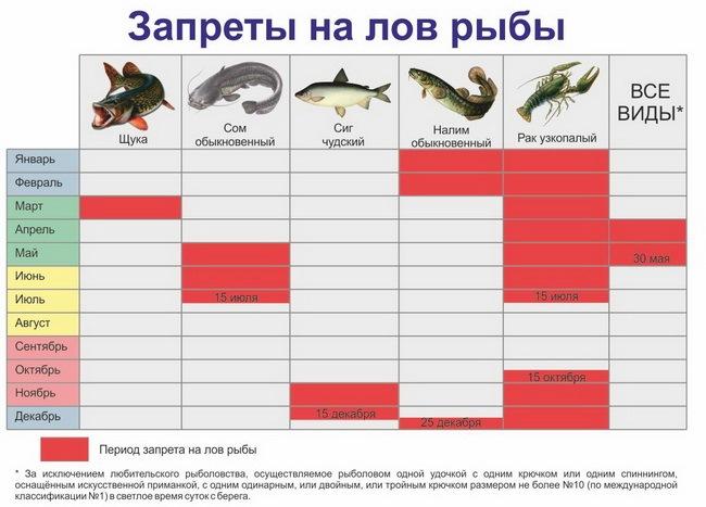 Нерест рыбы. что такое нерест и как он проходит у разных видов рыб
