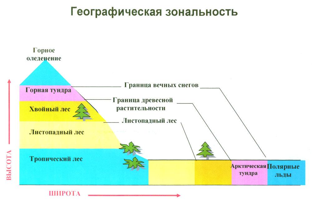 Что такое широтная зональность? в чем она проявляется?