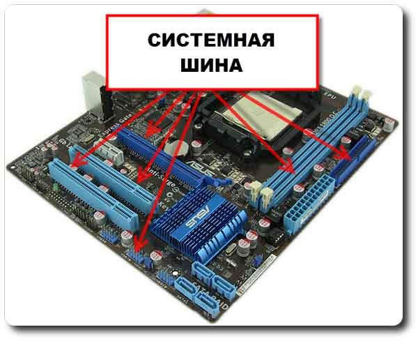 Шина процессора