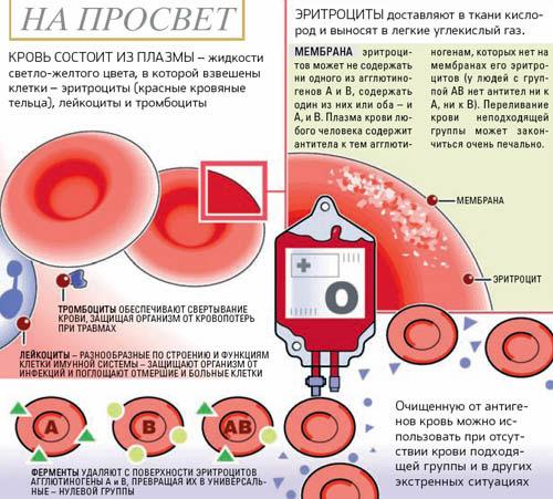 Кровь+ — википедия. что такое кровь+