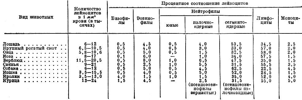 Лейкоцитарная формула крови: расшифровка, сдвиги, отклонения показателей