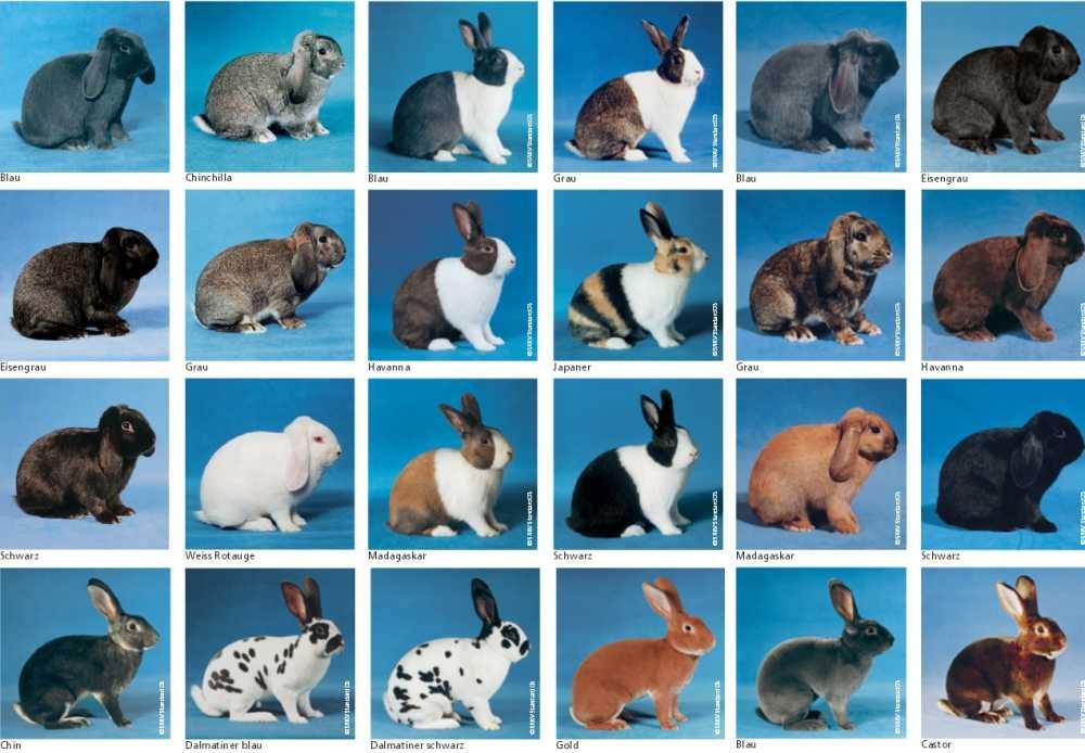 Кролики — википедия