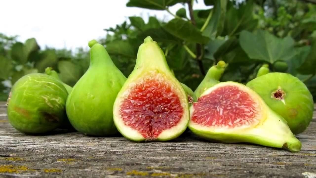 Сливовая смоква