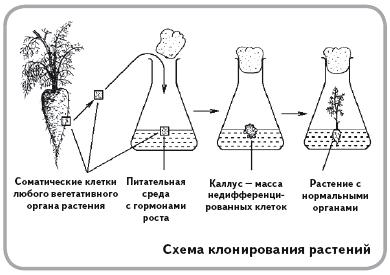 Клонирование животных - за и против | joinfor.ru