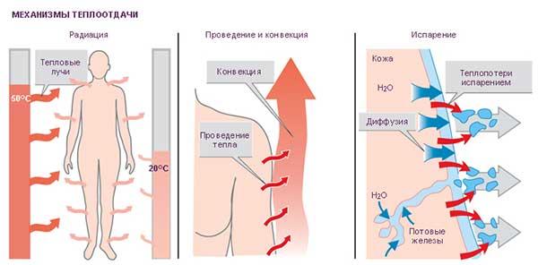 Химическая терморегуляция