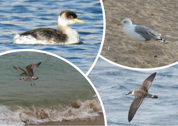 Отряды класса птиц - список, названия, фото и краткое описание
