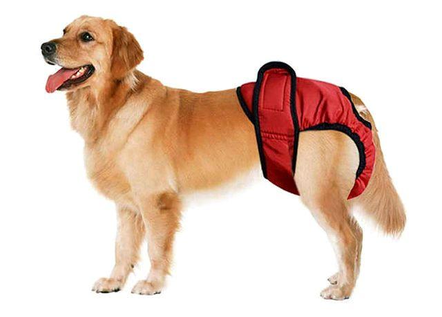 Как понять, что у собаки течка: этапы цикла, признаки, советы владельцам