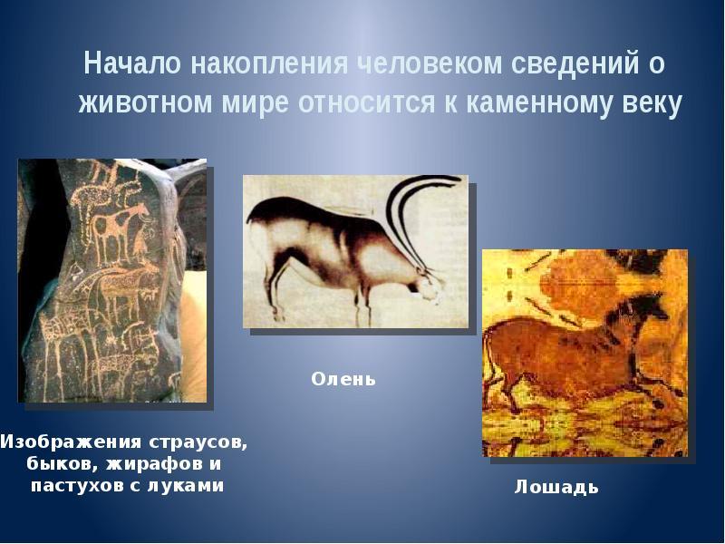 Что такое зоология и что она изучает? этапы и развитие зоологии