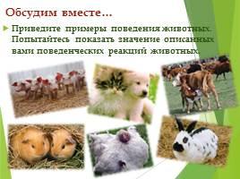 Что такое этология животных? что изучает наука этология?