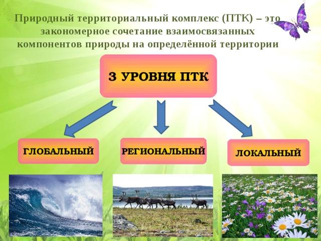 Экосистема: что это, характеристика, виды, из чего состоит, типы, уровни и примеры  - «как и почему»