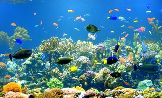 Рифы - что такое? барьерный, коралловый риф
