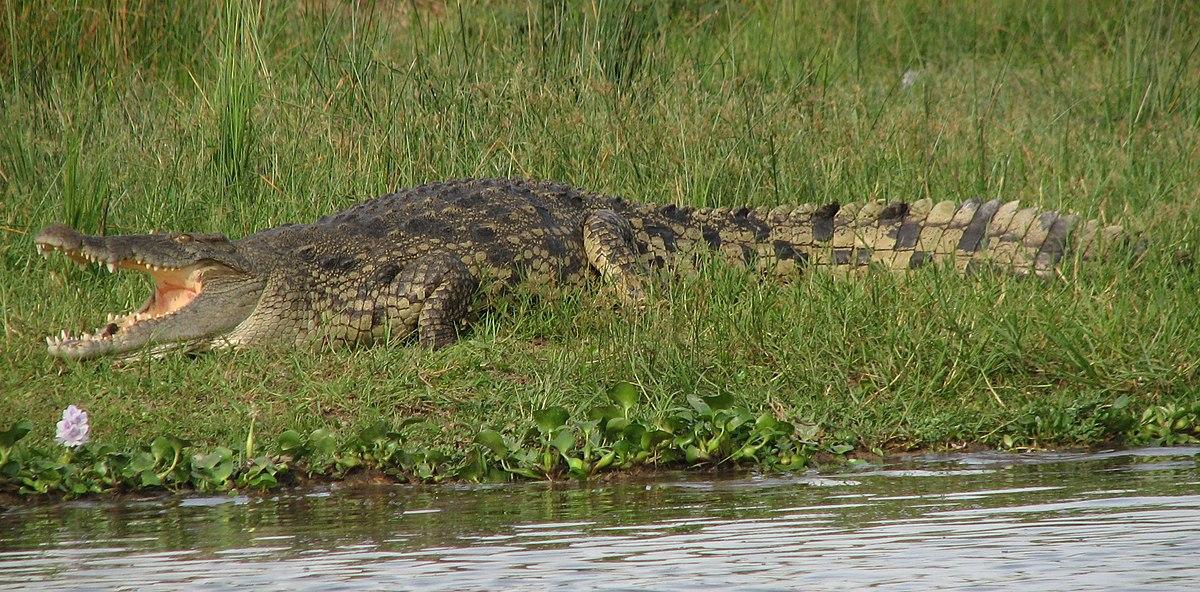 Настольная игра крокодил  – изобразите крокодила жестами