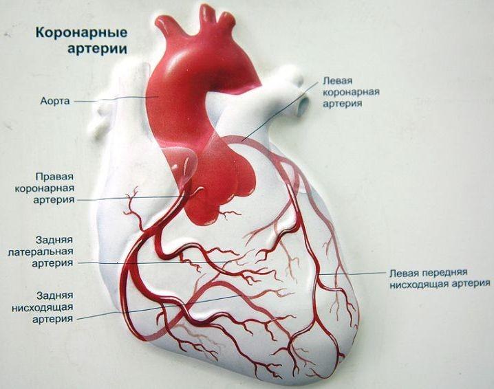 Что такое общее периферическое сопротивление? системное артериальное давление. общее периферическое сопротивление сосудов что такое опсс в кардиологии