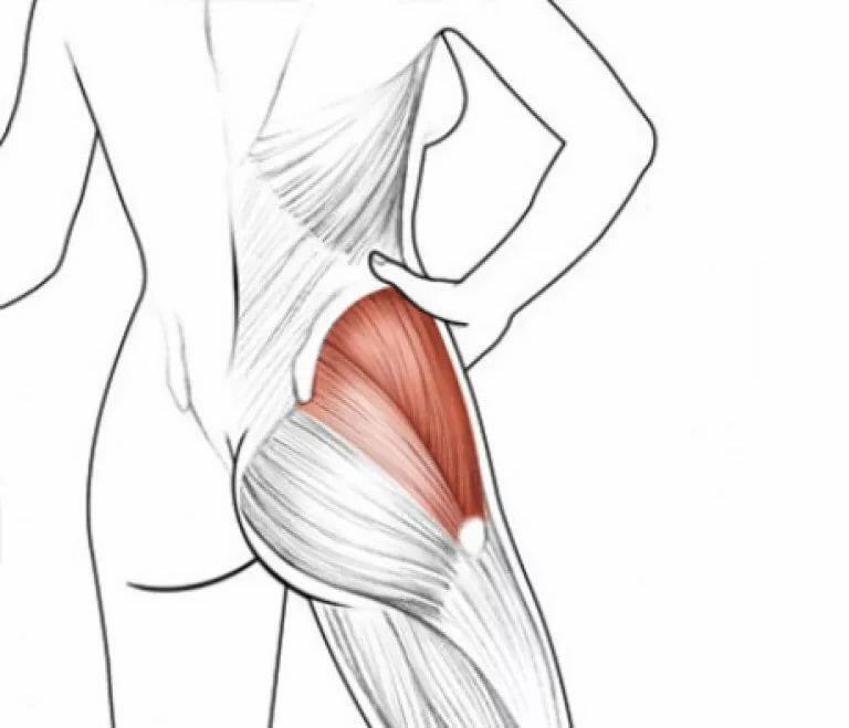 Ягодичные мышцы: анатомия, строение и функции
