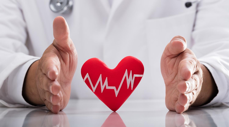 Сердце — википедия. что такое сердце