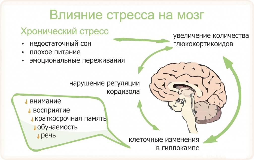 Значение кортизола для организма и нормы его содержания у женщин