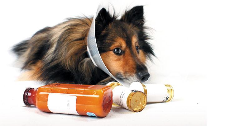 Нестероидные противовоспалительные препараты: список лекарств, зачем назначаются, при каких заболеваниях