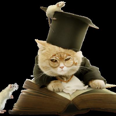 Коты и интернет