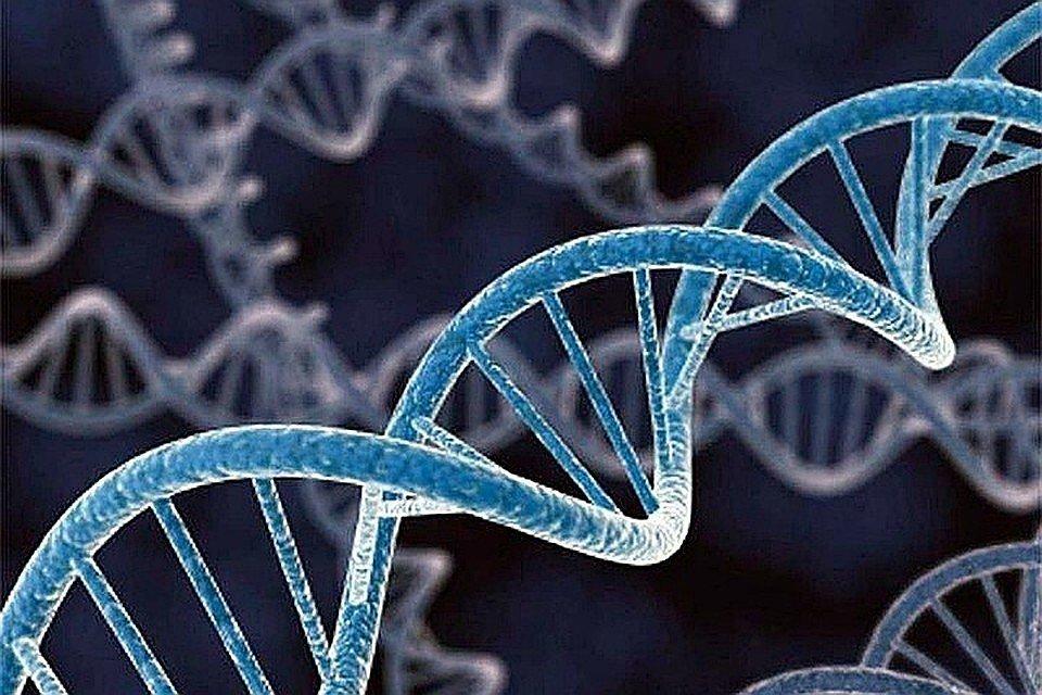 Ген, геном, хромосома: определение, структура, функции
