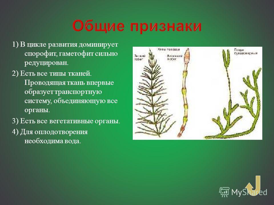 Урок 8: эволюция растений - 100urokov.ru