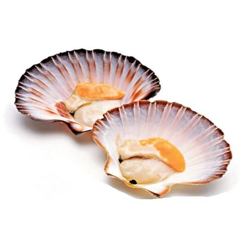 Морской гребешок: что это такое, описание, фото, польза, как приготовить, как едят