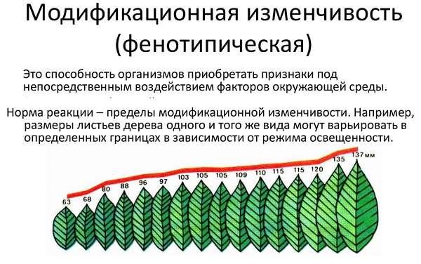 Закономерности изменчивости. ненаследственная (модификационная) изменчивость. норма реакции. наследственная изменчивость: мутационная, комбинативная