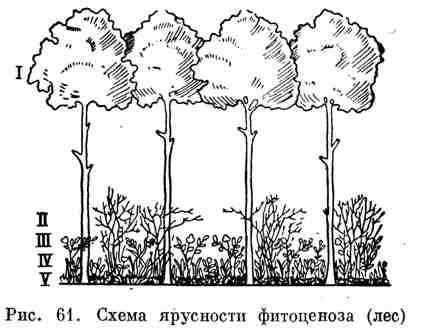 Характеристика фитоценозов
