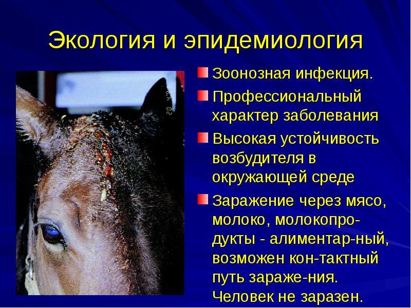 Зоонозы мелких млекопитающих — болезни, передающиеся человеку