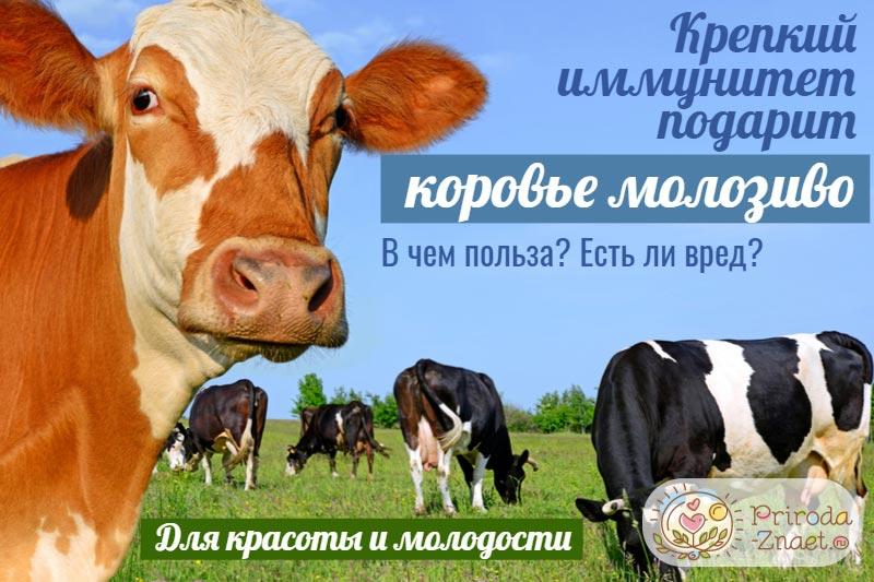 Что такое молозиво и когда оно появляется — 25 рекомендаций на babyblog.ru