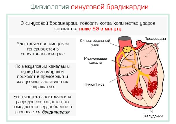 Синусовая брадикардия лечение народными средствами - о вашем сердце