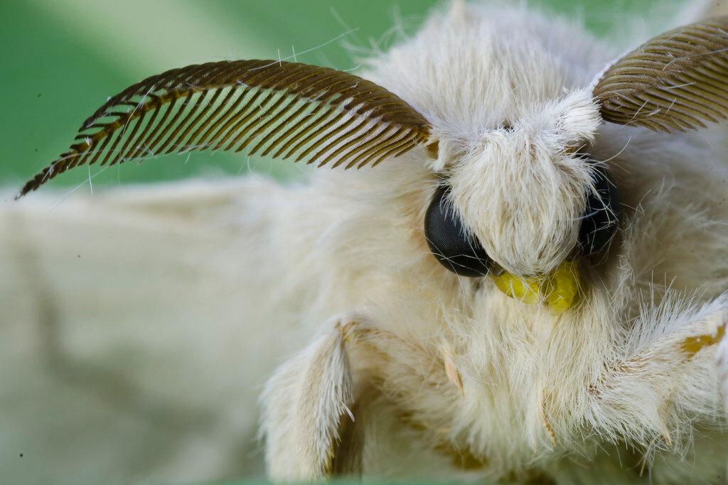 Бабочка (мультфильм) — википедия. что такое бабочка (мультфильм)